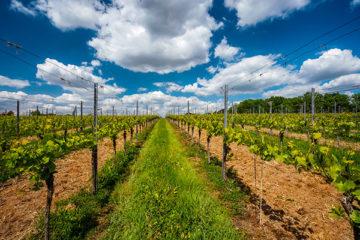 vigne dans le grand est : trouvez votre domaine avec AGRI TEAM
