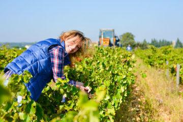 Métiers de la viticulture avec AGRI TEAM.