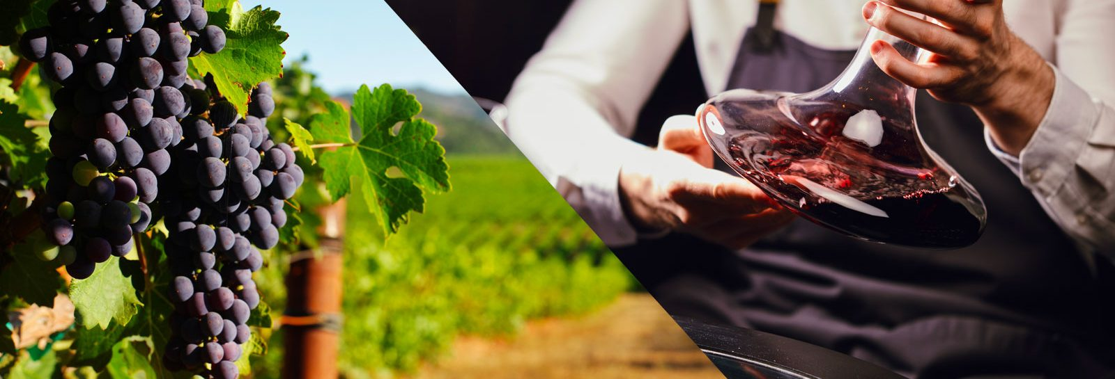 agri team viticulteur